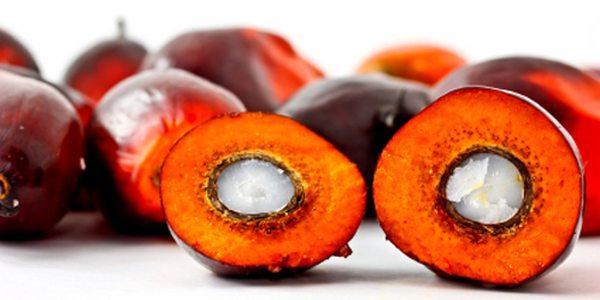 Conferma shock: l'olio di palma fa male soprattutto ai bambini!